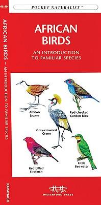 African Birds By Kavanagh, James